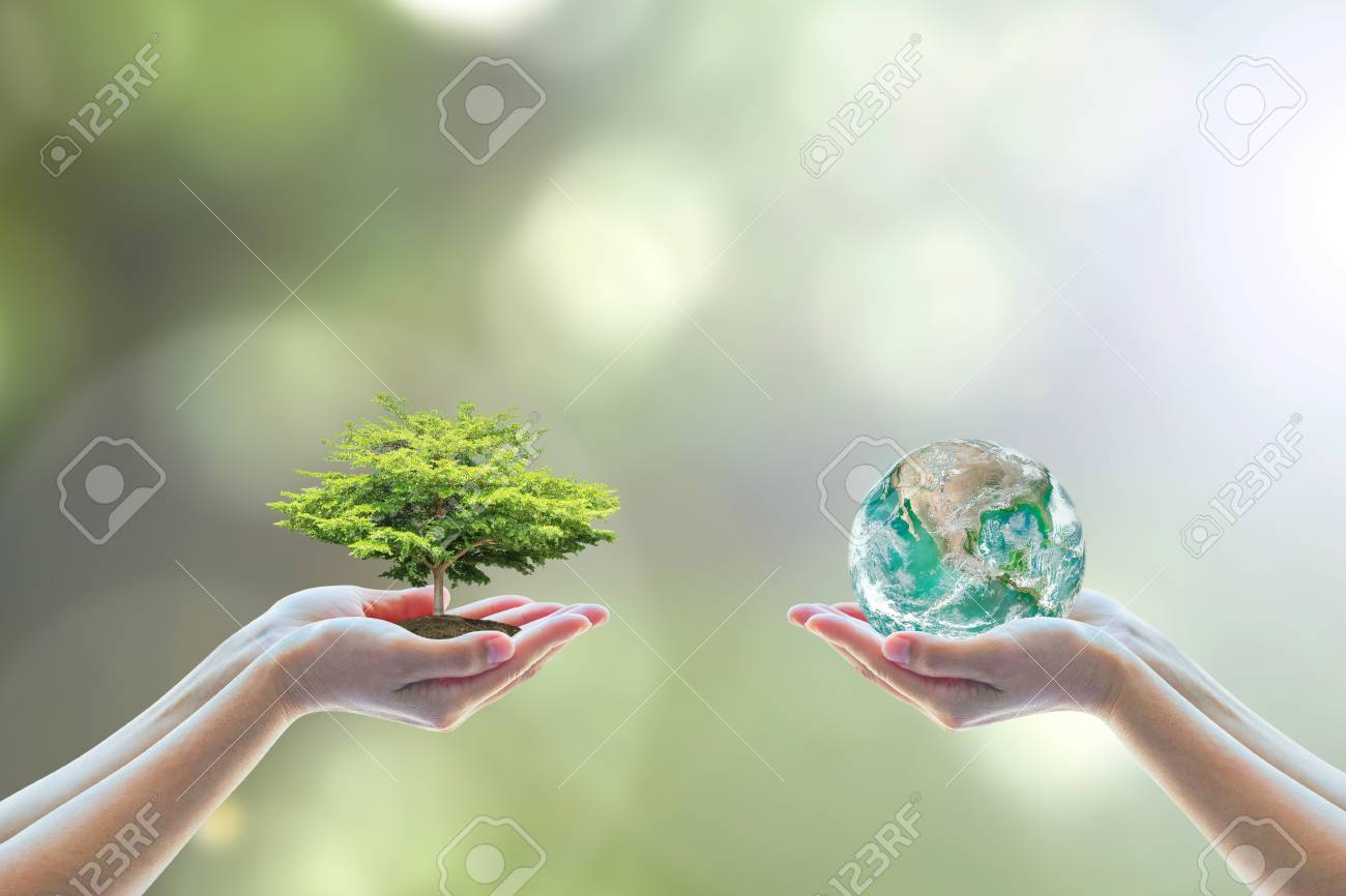 World environment day concept with tree planting and green earth on volunteering hands. - 116055971