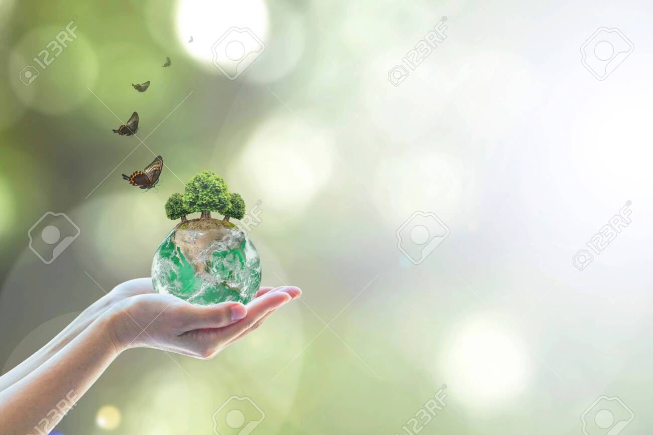 Planting green globe and arbor tree on volunteer's hand for saving environment nature conservation and csr concept - 132740998