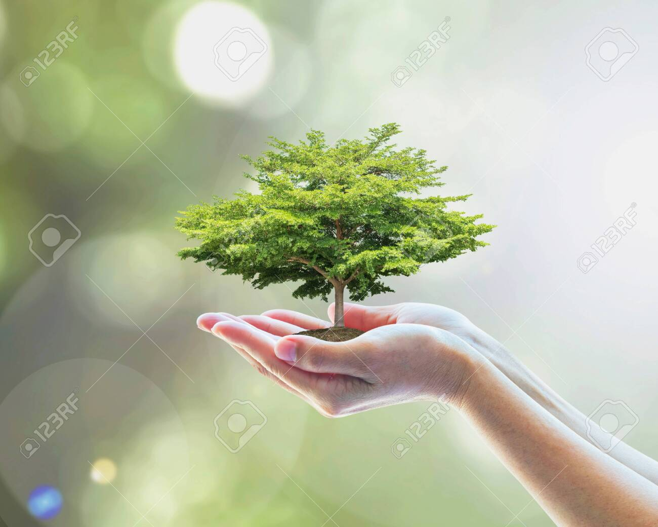 Sustainable environment, saving environmental ecosystem of forest, and go green concept with tree planting on volunteer's hands - 133216525