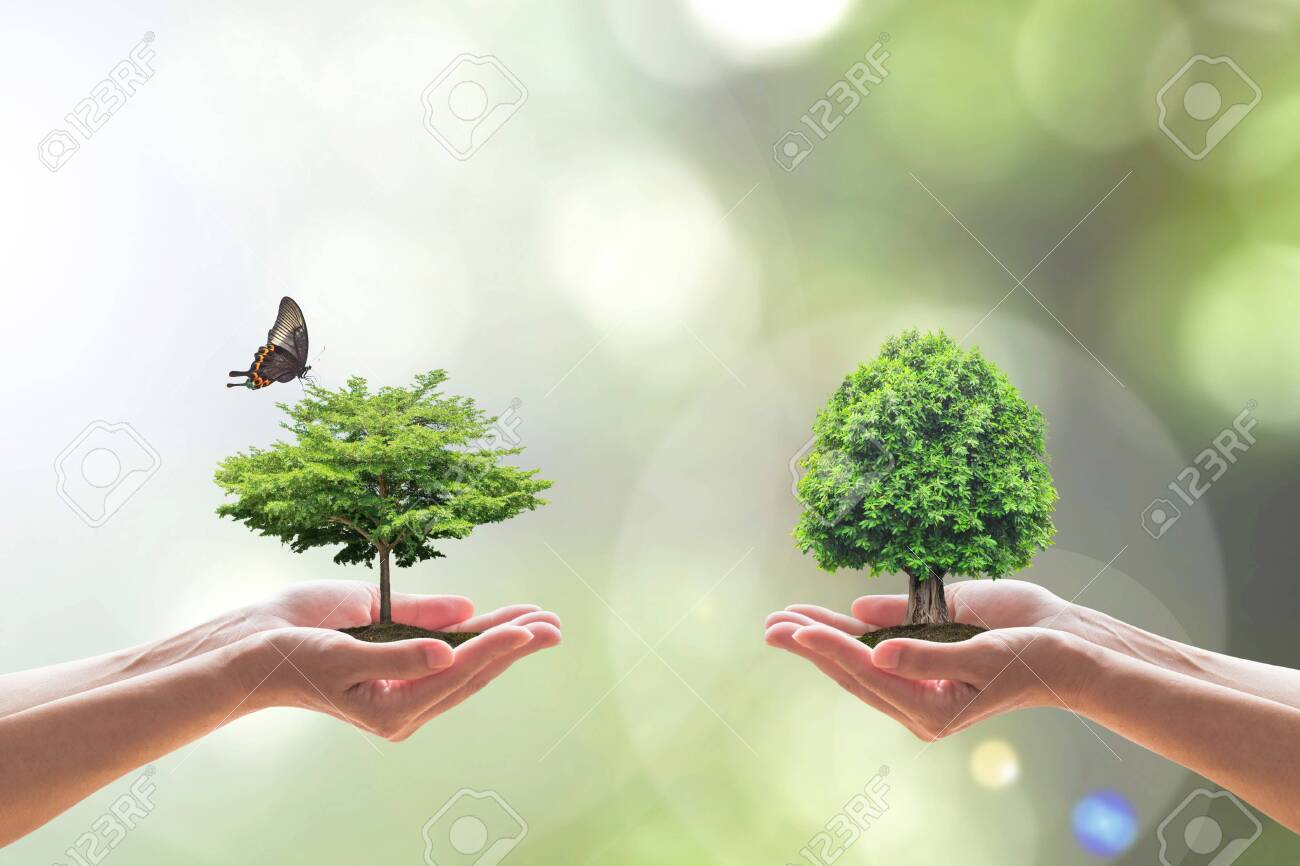 Environmental biodiversity in ecosystem concept with bio diversity in species of tree planting and saving biological life living in clean environment on volunteers hands - 135260310