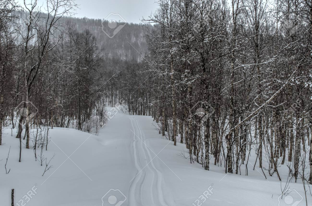 beautiful mountain birch forest in easter with snowmobile tracks
