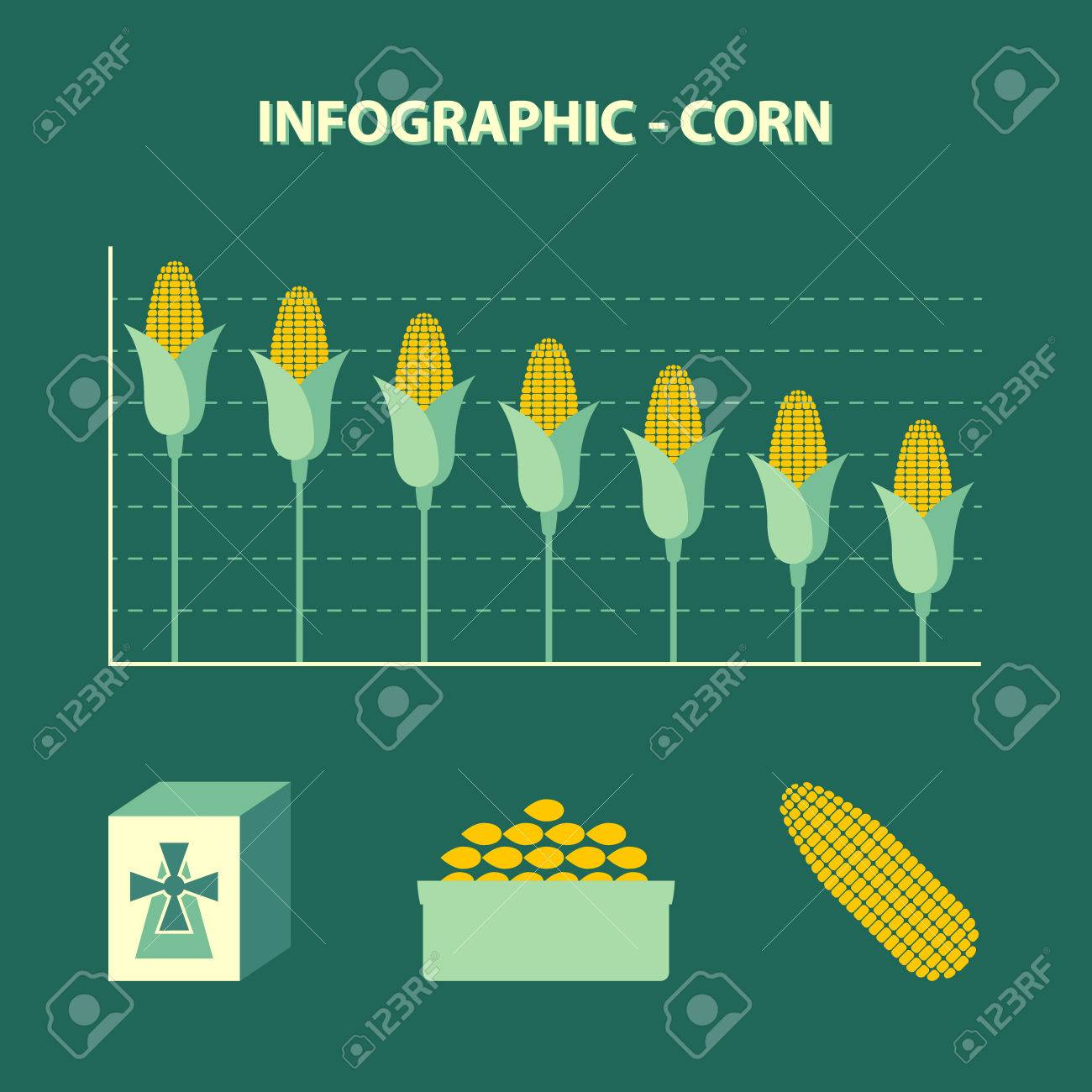 Vector colored infographic declining production of corn info vector vector colored infographic declining production of corn info graph in flat design with icon of flour bowl with grains and yellow maize ear on ccuart Images