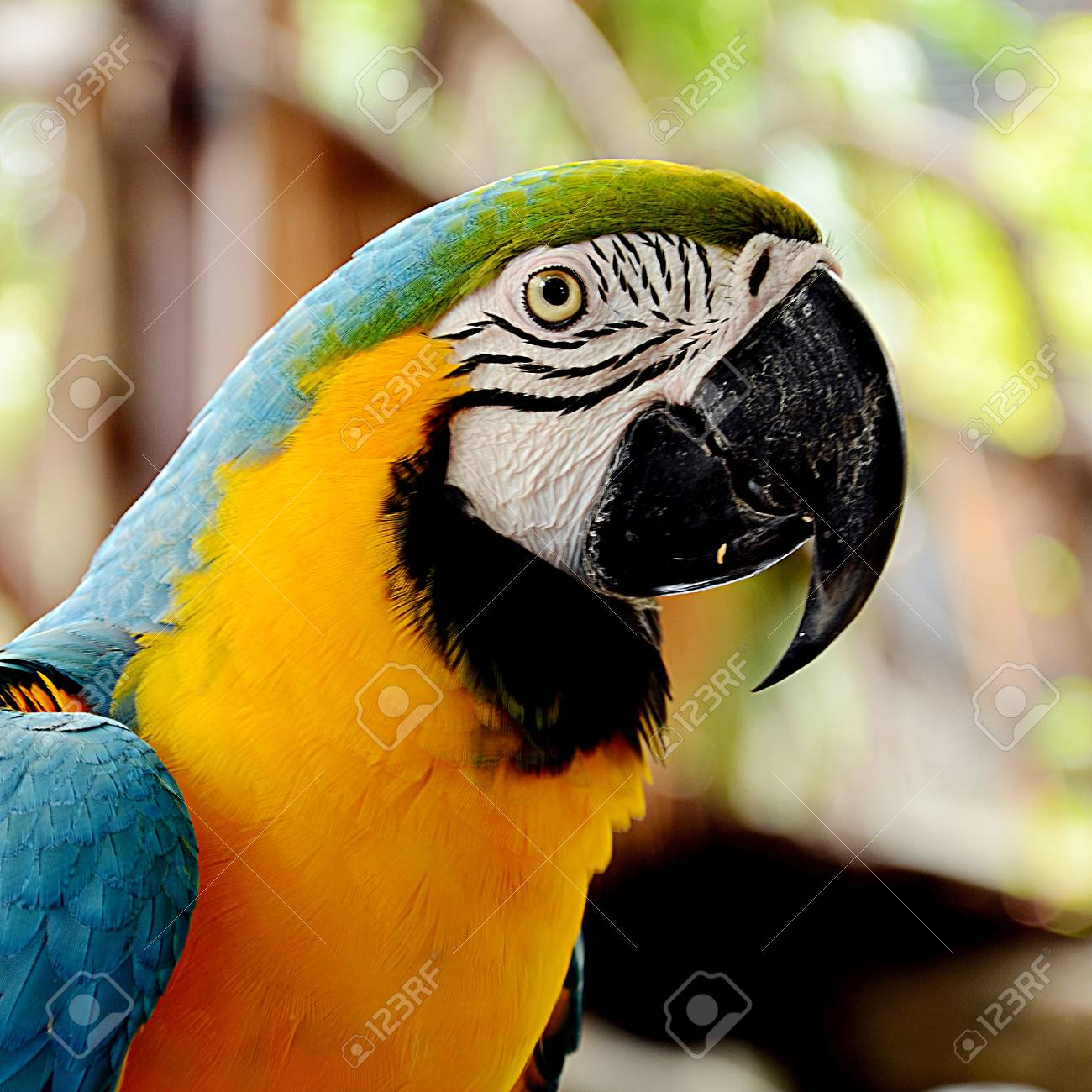 Macaw parrot in head shot Stock Photo - 15985762