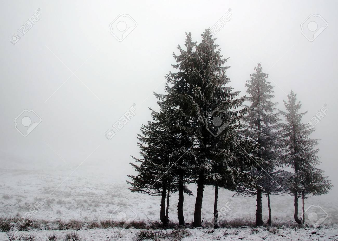Landscape with line of trees with fog Stock Photo - 1771818