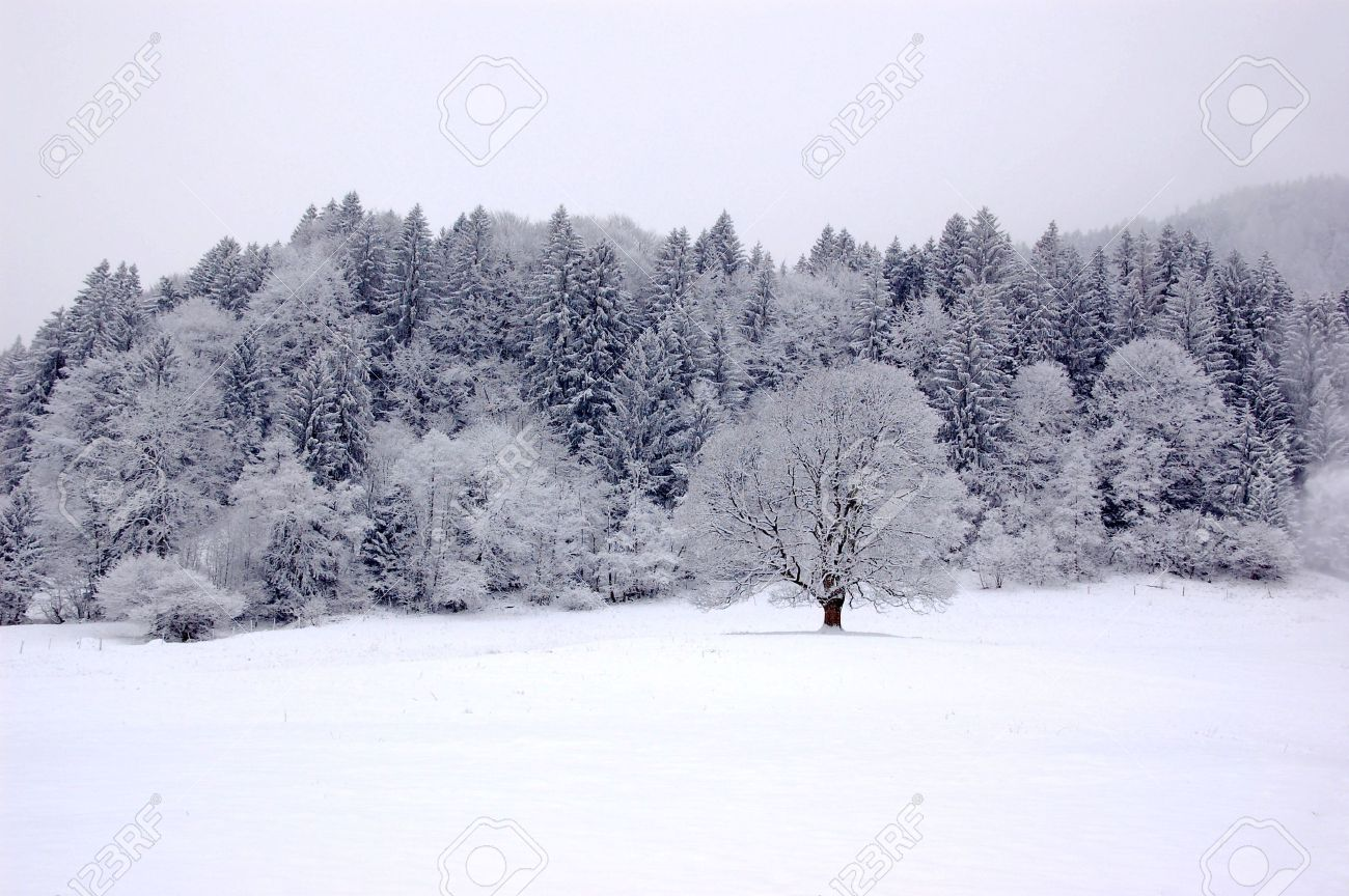 A winter landscape with fog and snow ib black and white Stock Photo - 3313723