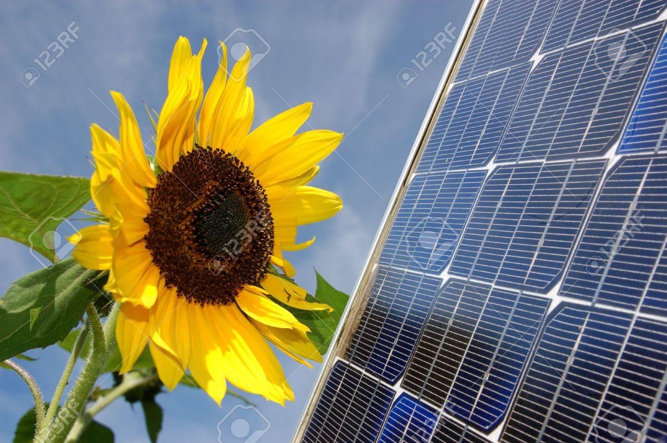 Sunflower and a solar energy panel Stock Photo - 3437833