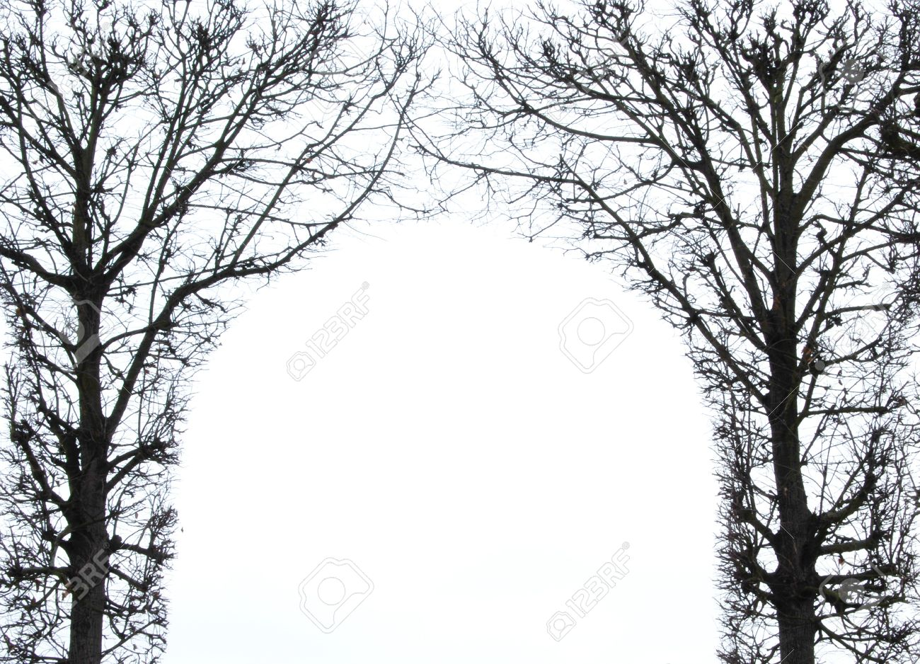 Natural Frame Of Two Trees Stock Photo, Picture And Royalty Free ...
