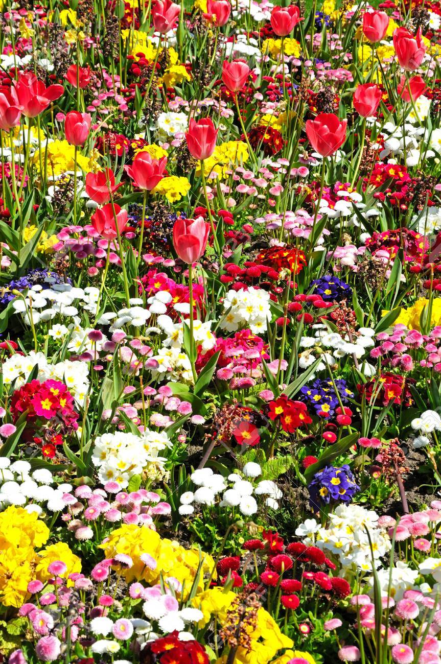 Pretty Flowerbed With Spring Flowers Including Bellis Primroses