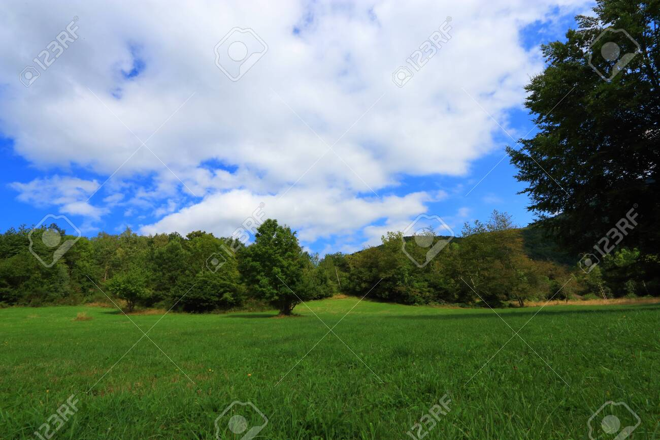 spring meadow in Pyrenean, Aude in the southern of France - 132389223