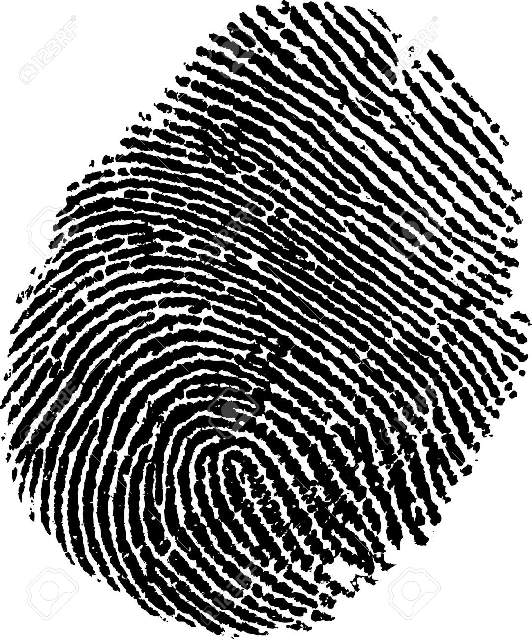 fingerprint /vector/ Stock Vector - 9930572