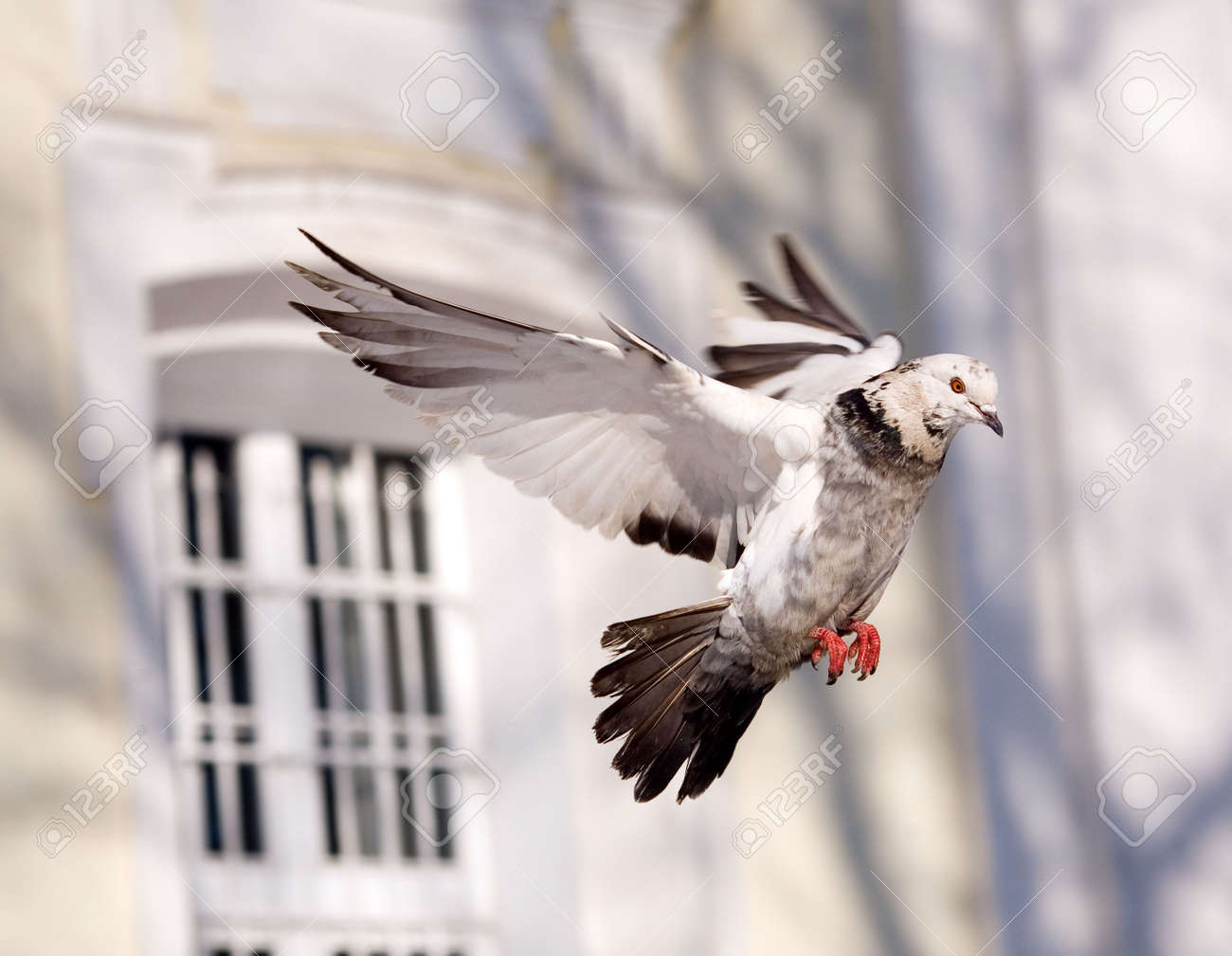 The pigeon in flight on a background of church Stock Photo - 807001