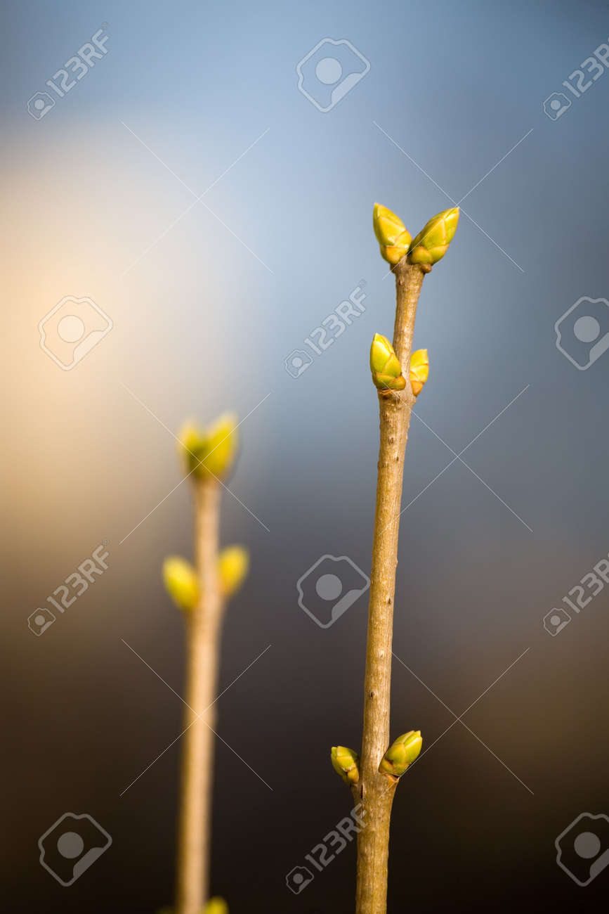 The first buds on a tree in the spring Stock Photo - 849847