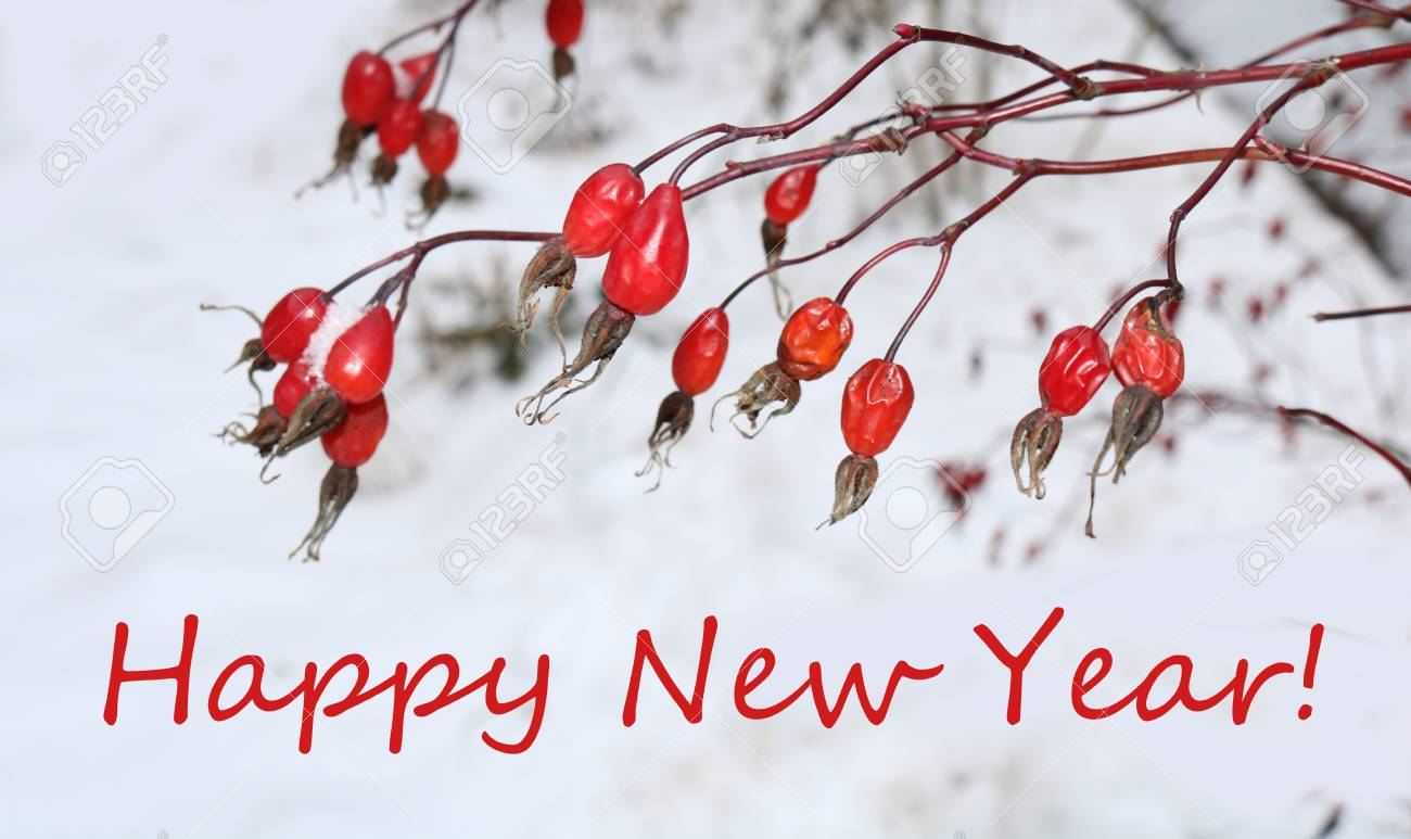 red rose hips on a postcard happy new year stock photo 92494800