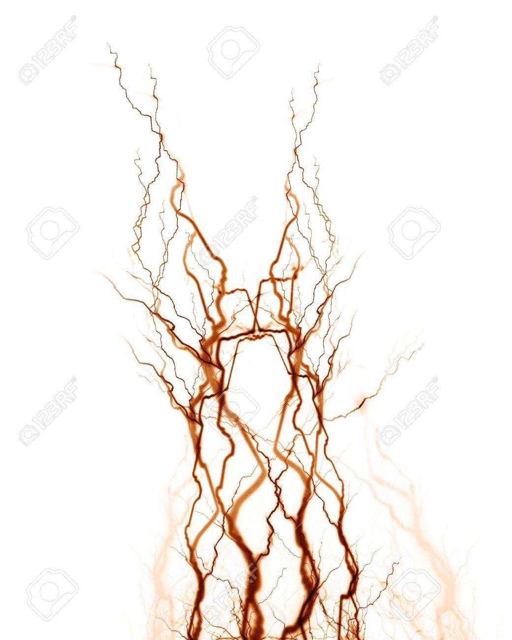 Menschliches Nervensystem Auf Weißem Hintergrund Lizenzfreie Fotos ...