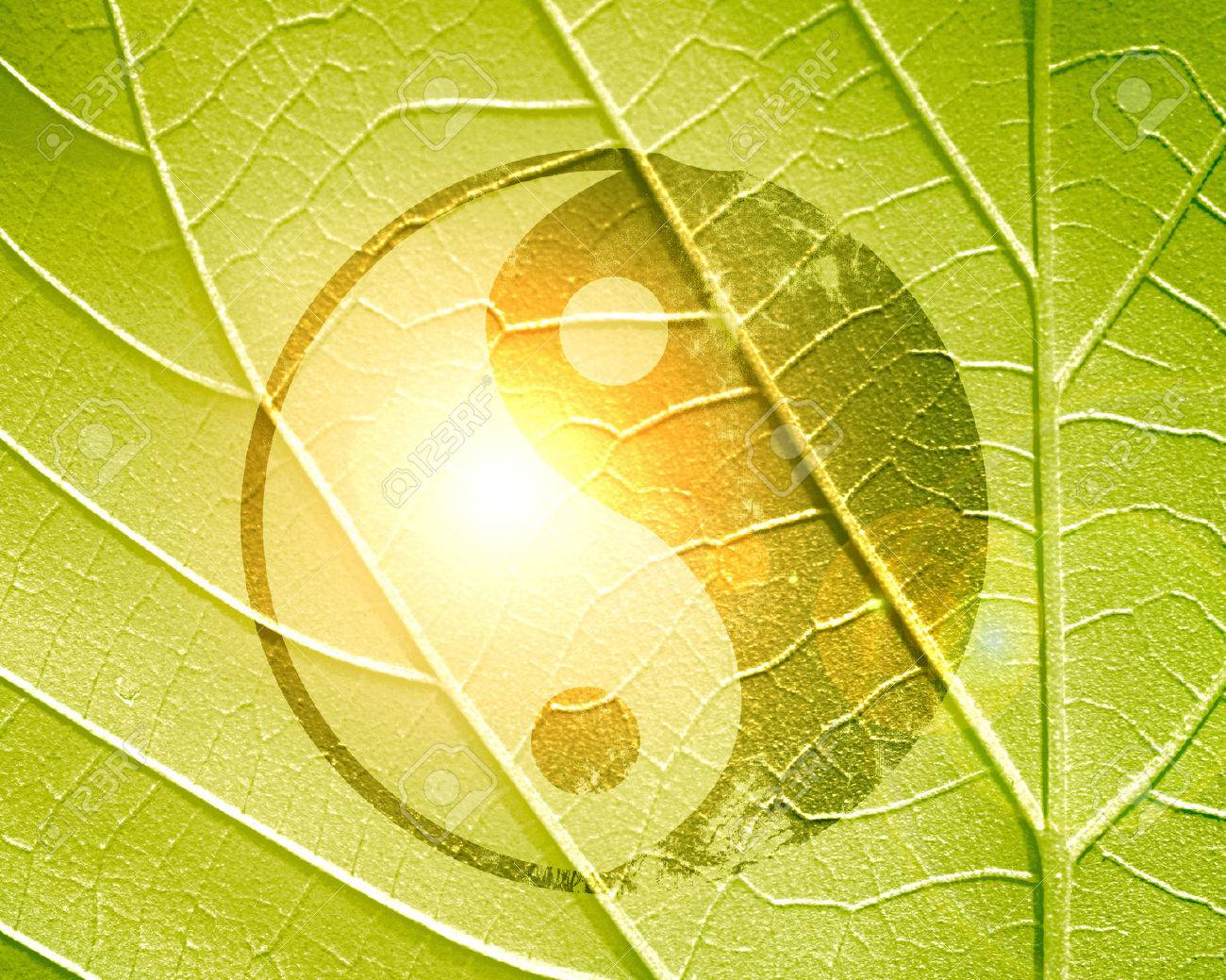 yin yang sign on a natural green background Stock Photo - 22347869
