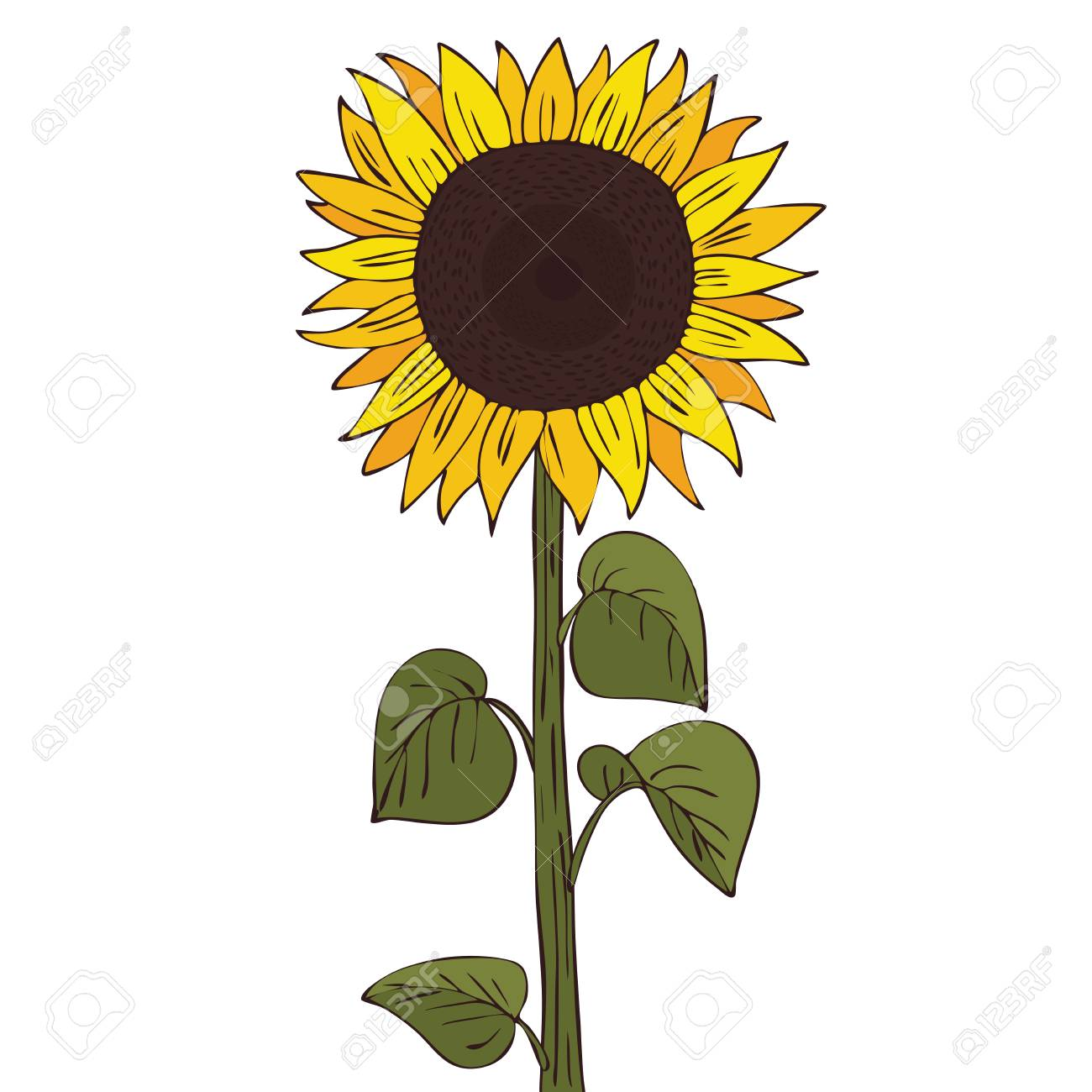 isolate helianthus or sunflower vector illustration royalty free rh 123rf com sunflower vector free download sunflower vector logo