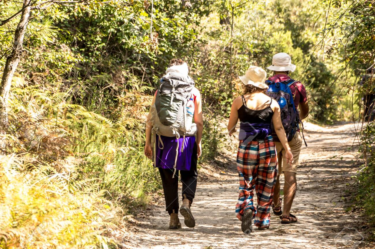 3 GOOD friend hiking and trekking in the green forest - 136554736