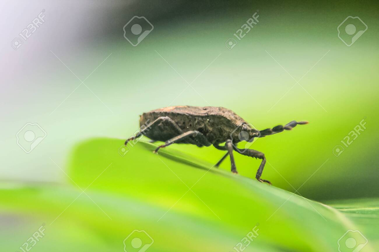 close up photo of the insect on a leaf with a blurred background - 137888633