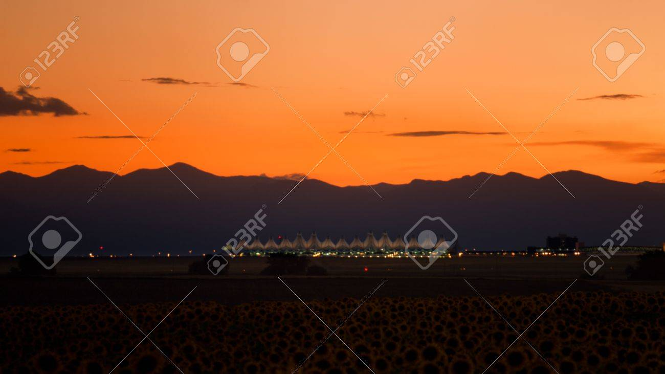 Sunflower field with Denver International Airport in the background. Stock Photo - 10318015
