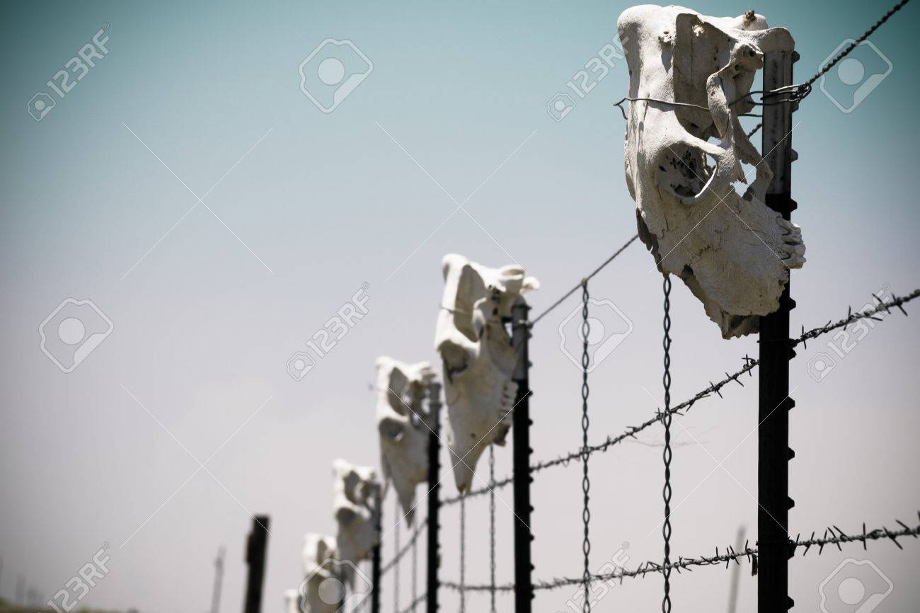 Fence With Cow Skulls Around Western Ranch. Stock Photo, Picture And ...