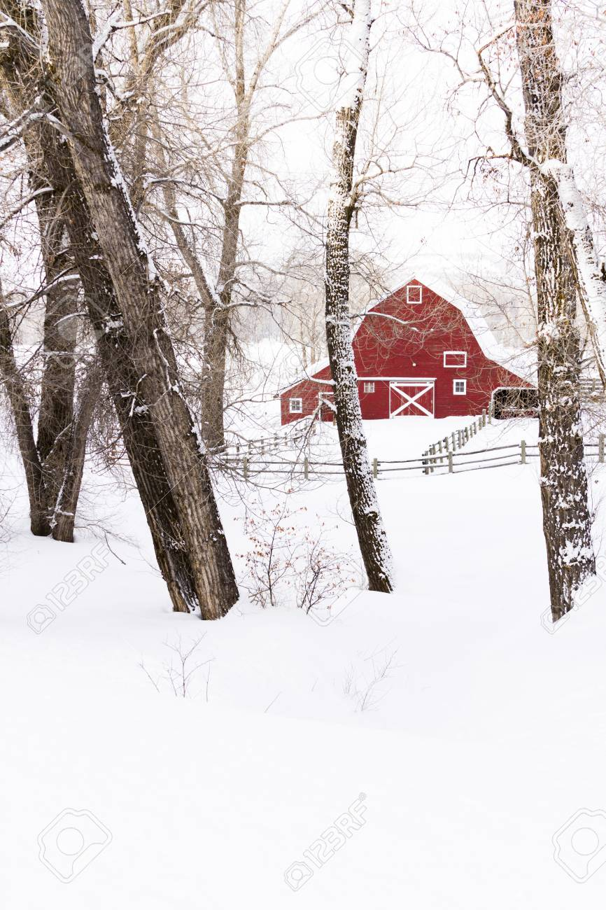 Red barn in snow on lamb farm. Stock Photo - 17950871