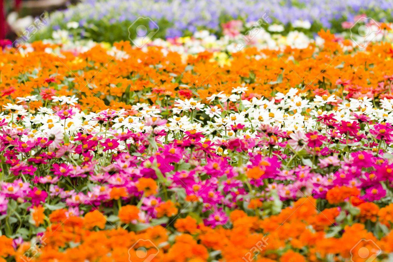 Spring Flowers On Display At Local Nursery Stock Photo Picture And
