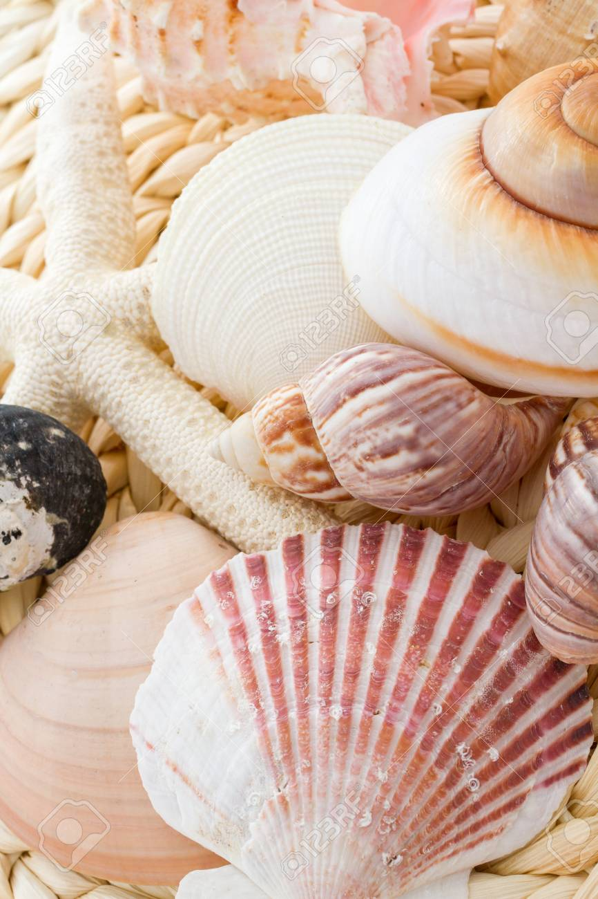 Variety of sea chells in different shapes. Stock Photo - 22226006