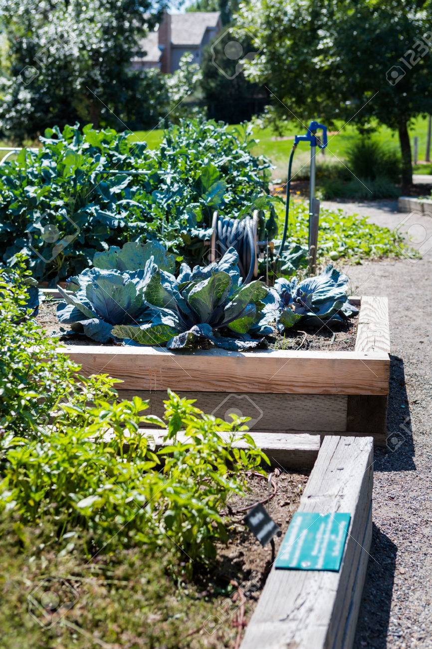 Organic urban garden in full growth at the end of the summer. Stock Photo - 31179836