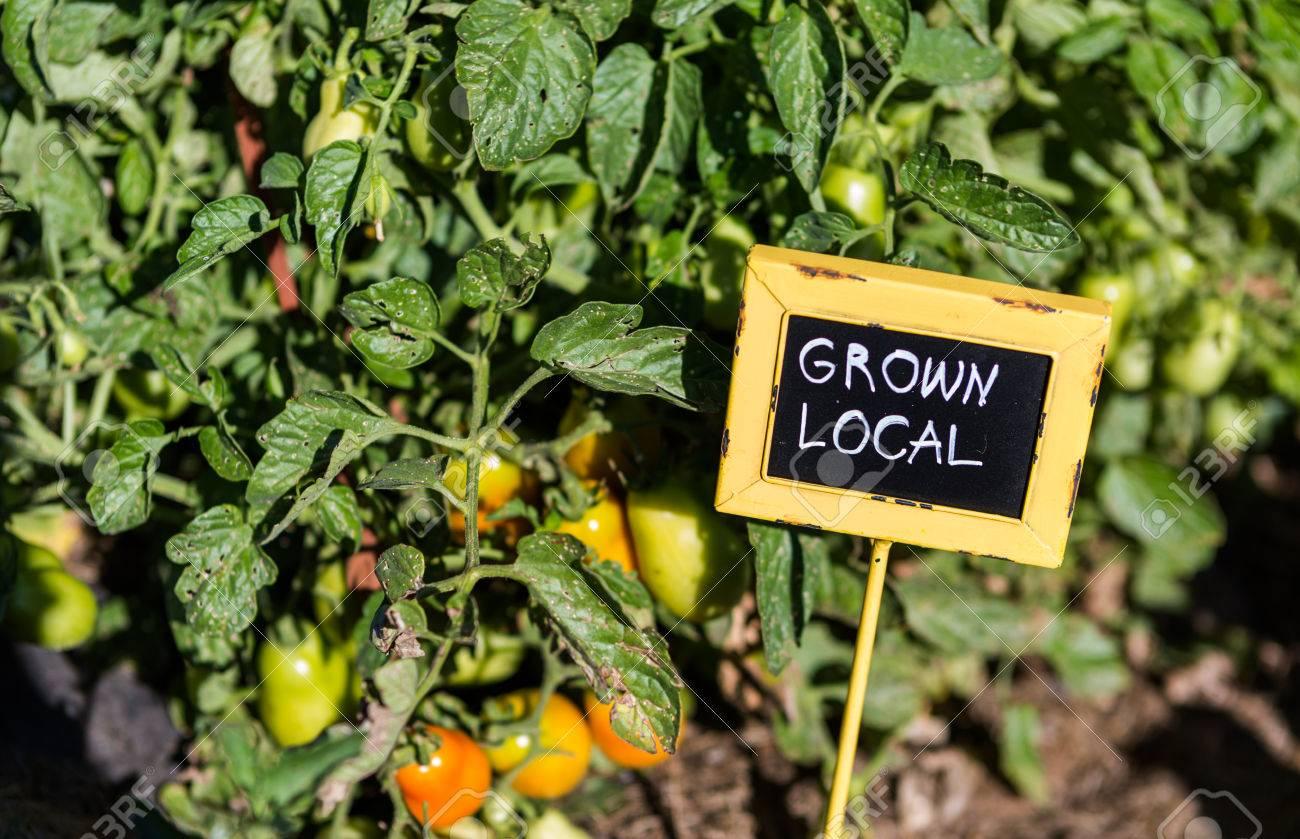 Late summer in organic community vegatable garden. Stock Photo - 31281535