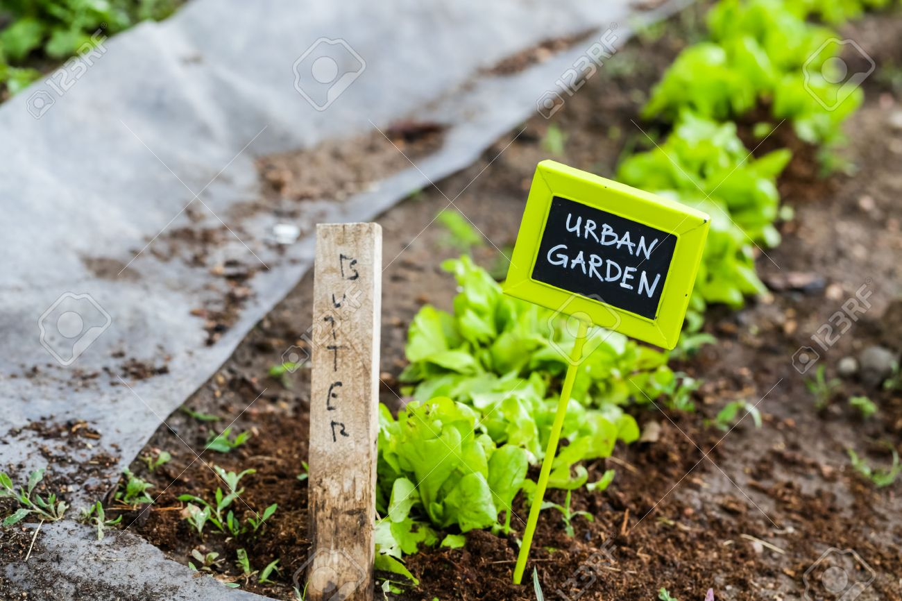 Early summer planting in urban garden. Stock Photo - 40989081