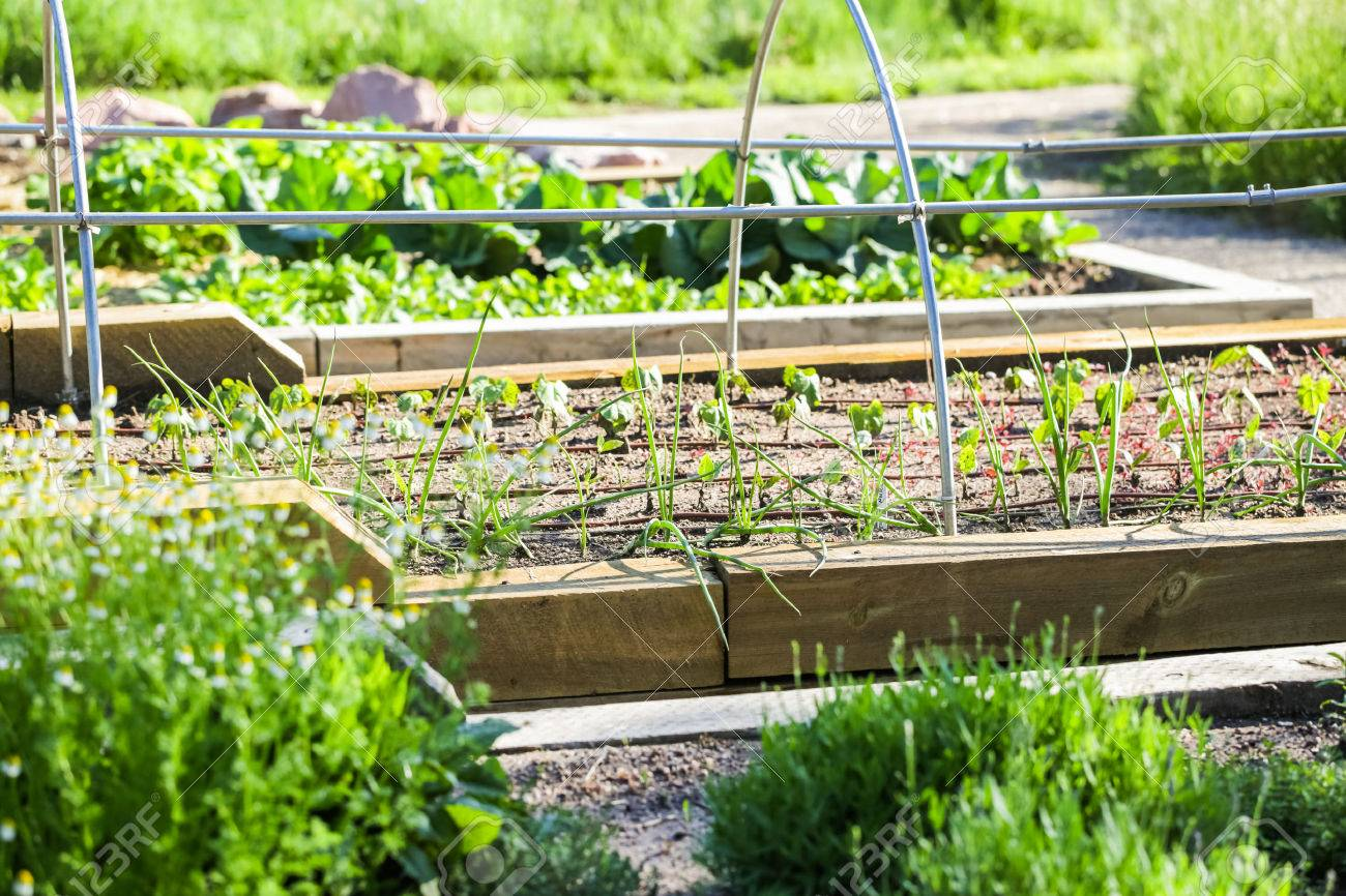 Early summer in urban vegetable garden. Stock Photo - 41207727