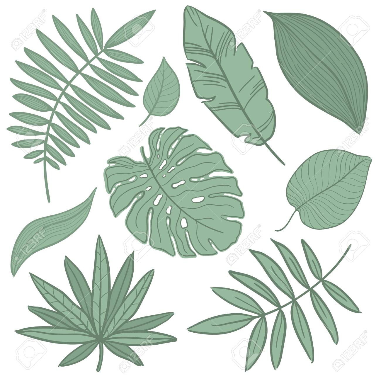 Vector Tropical Palm Leaves Jungle Split Leaf Philodendron Royalty Free Cliparts Vectors And Stock Illustration Image 95364706 The png format is also compatible with most design applications out there. vector tropical palm leaves jungle split leaf philodendron