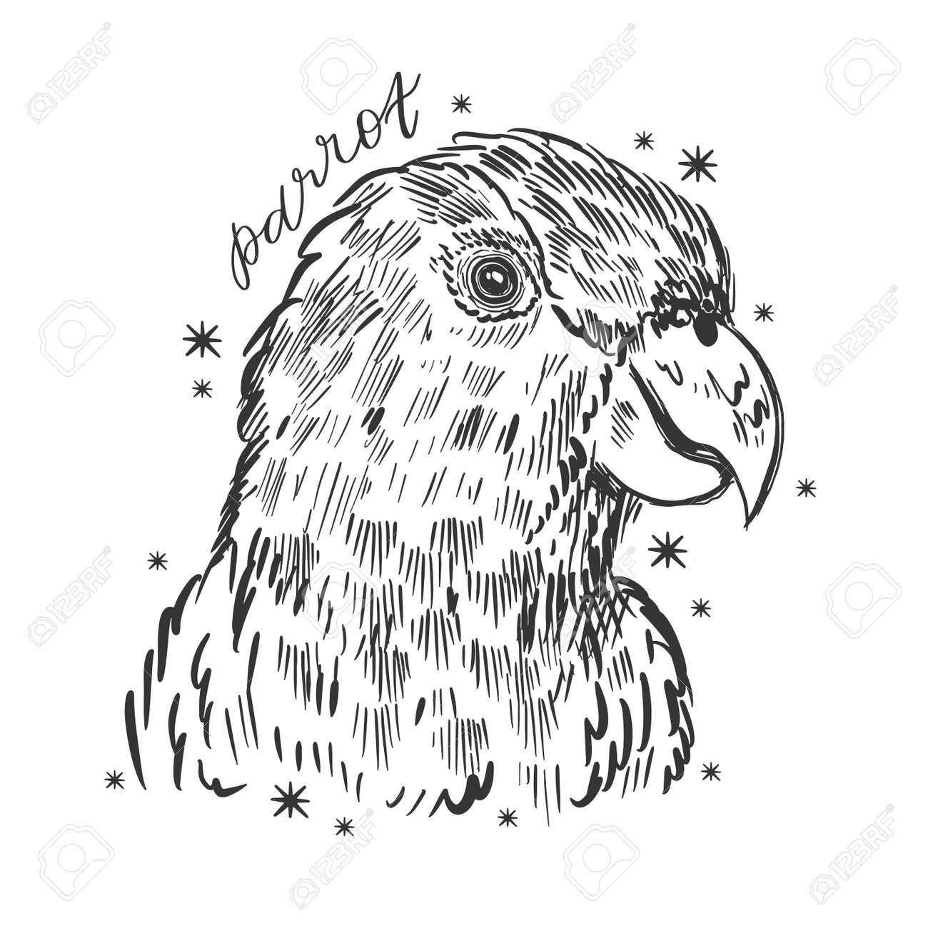 Parrot bird hand drawn sketch. Cute tropical design. - 156672270