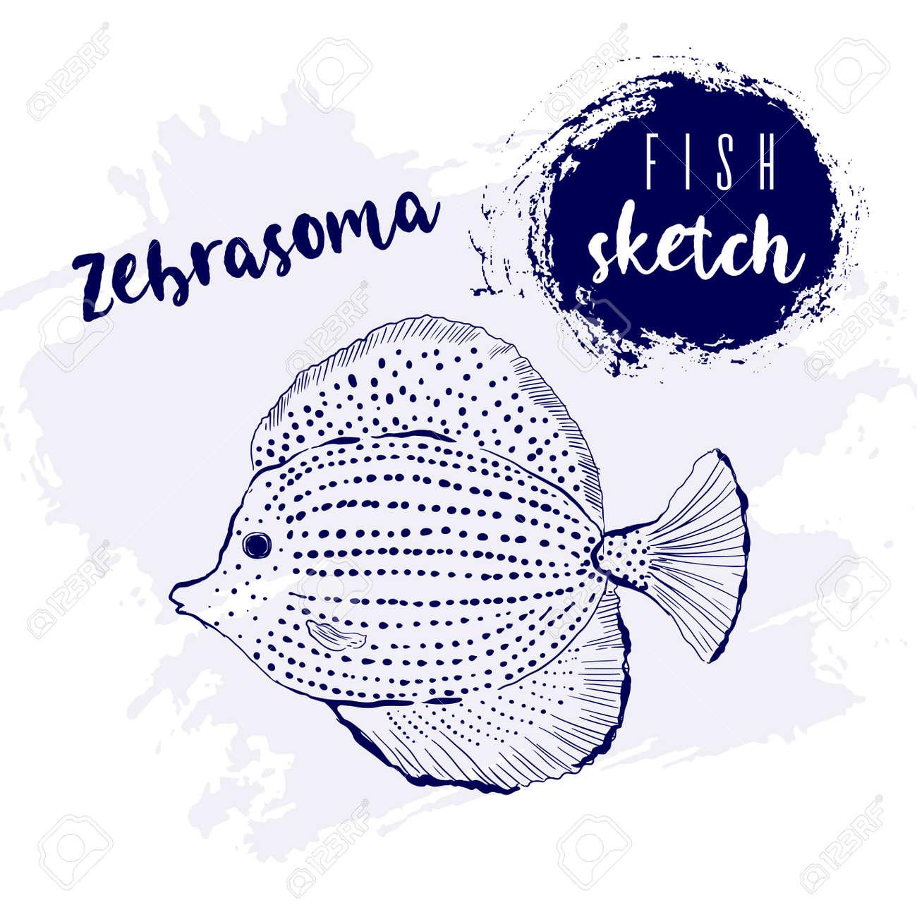 Vintage fish zebrasoma marine sketch.Retro line style.Hand drawn underwater. - 169556215