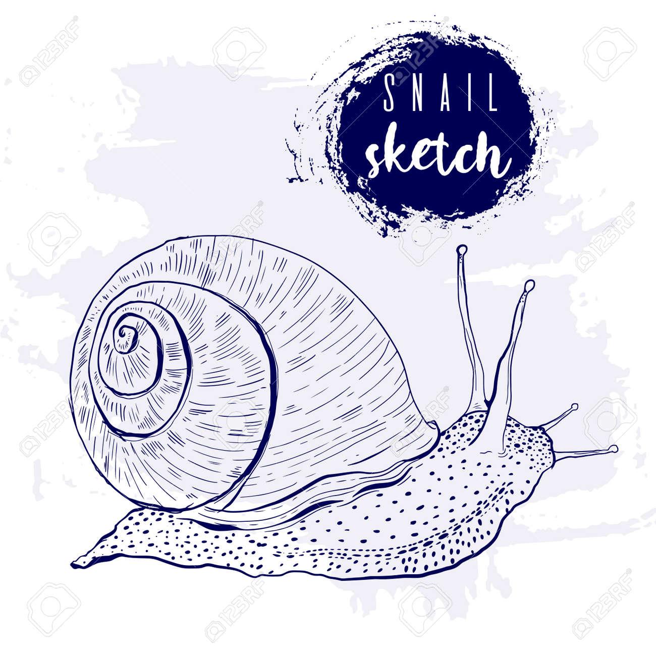 Vintage animal snail marine sketch.Retro line style.Hand drawn underwater - 169556217
