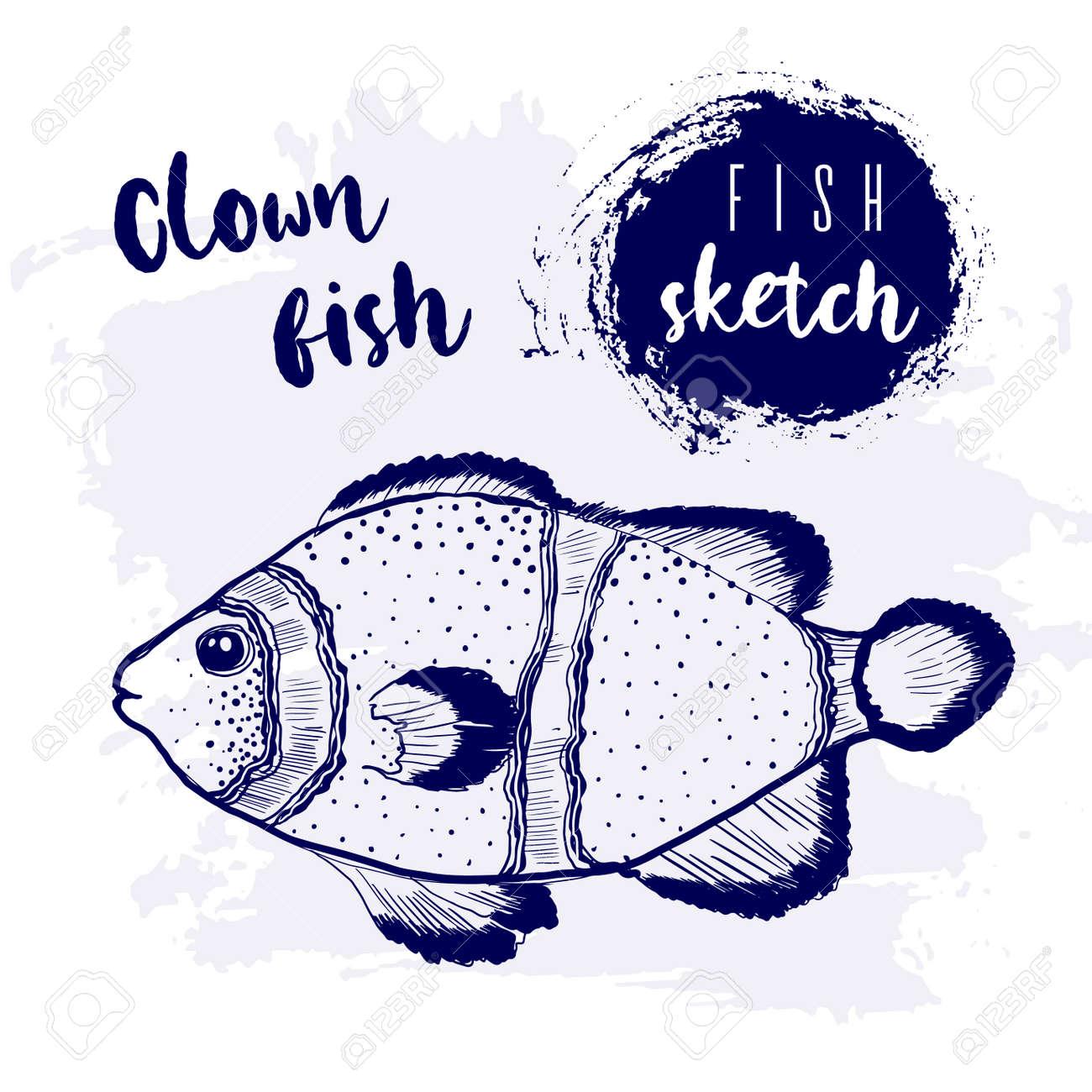 Vintage clown fish marine sketch.Retro line style.Hand drawn underwater. - 169556221
