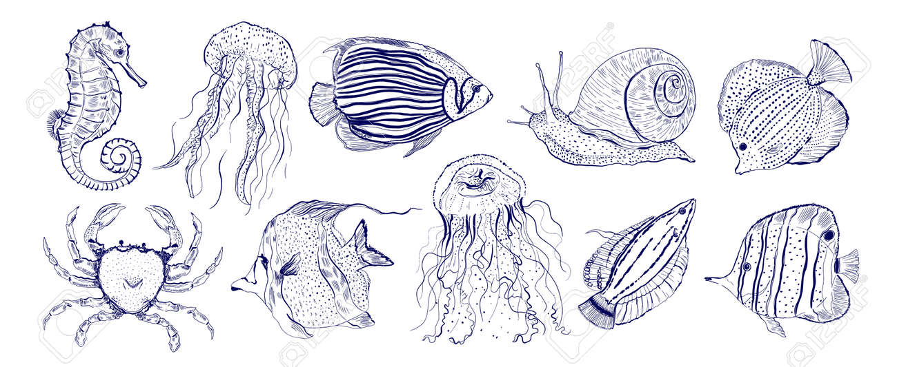 Collection marine animal fish.Sketch outline hand drawn.Crab,snail,seahorse,jellyfish and other. - 171969264
