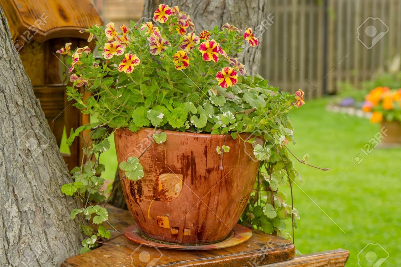 Petunia in decorative pot - 88880398