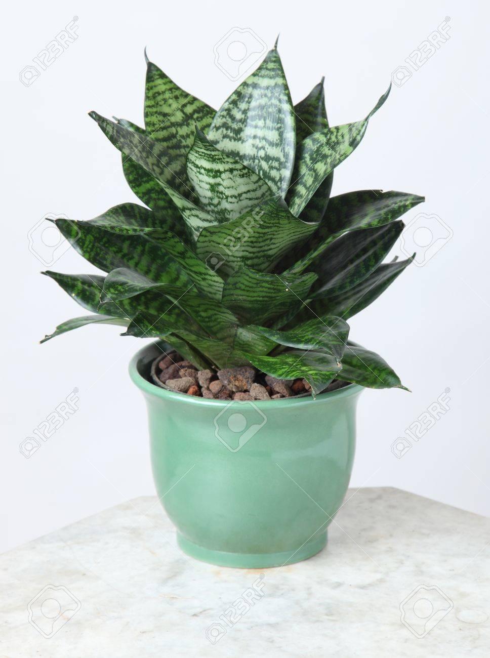 Ornamental Plants - 10587585