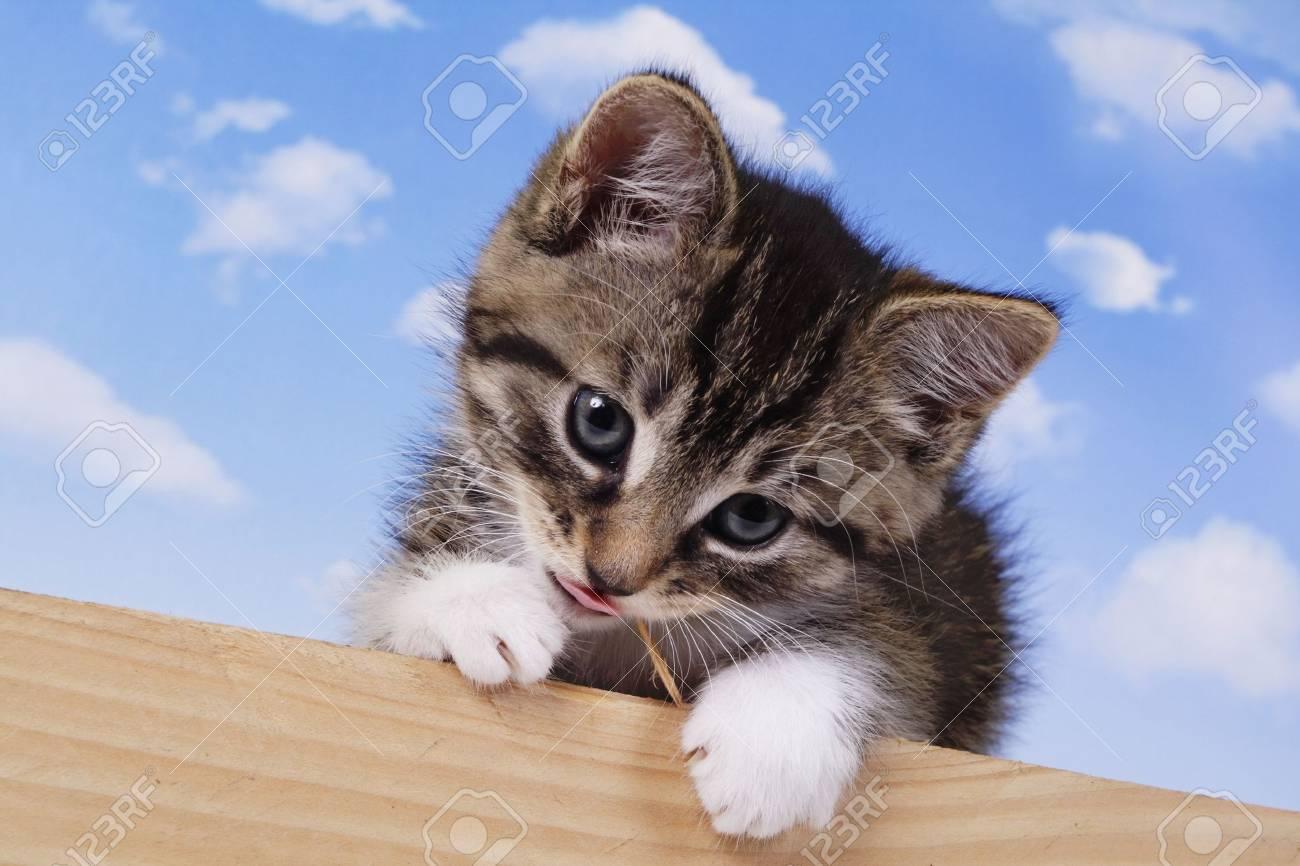 A little kitten - fluffy pets - 2236380
