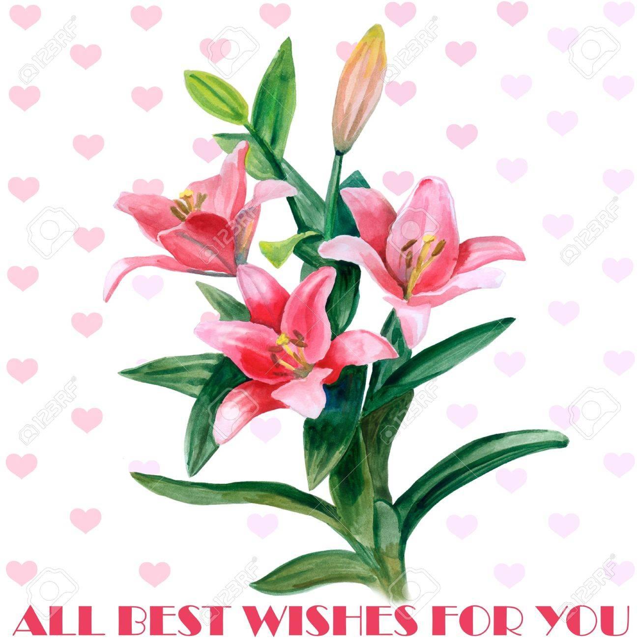 Hand Gezeichnet Aquarell Lilie Blumen Auf Weissem Hintergrund