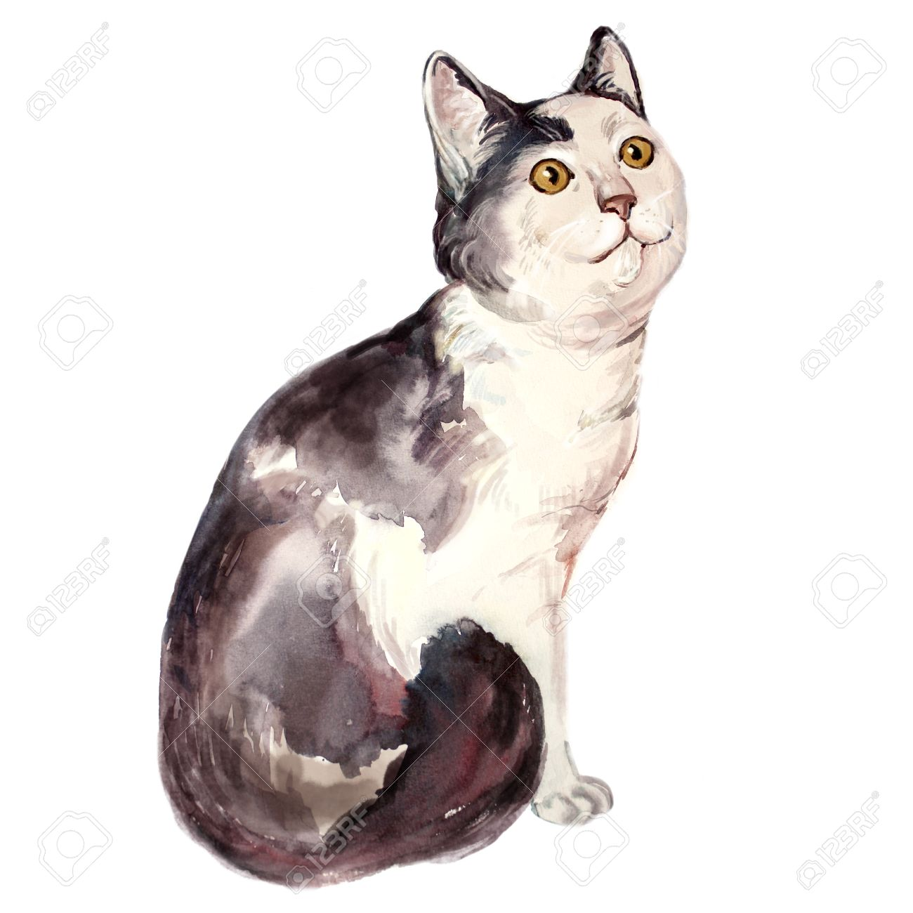 Watercolor Illustration Of Ugly Cat Looking Confused Dumb Face Stock Photo Picture And Royalty Free Image Image 53505876
