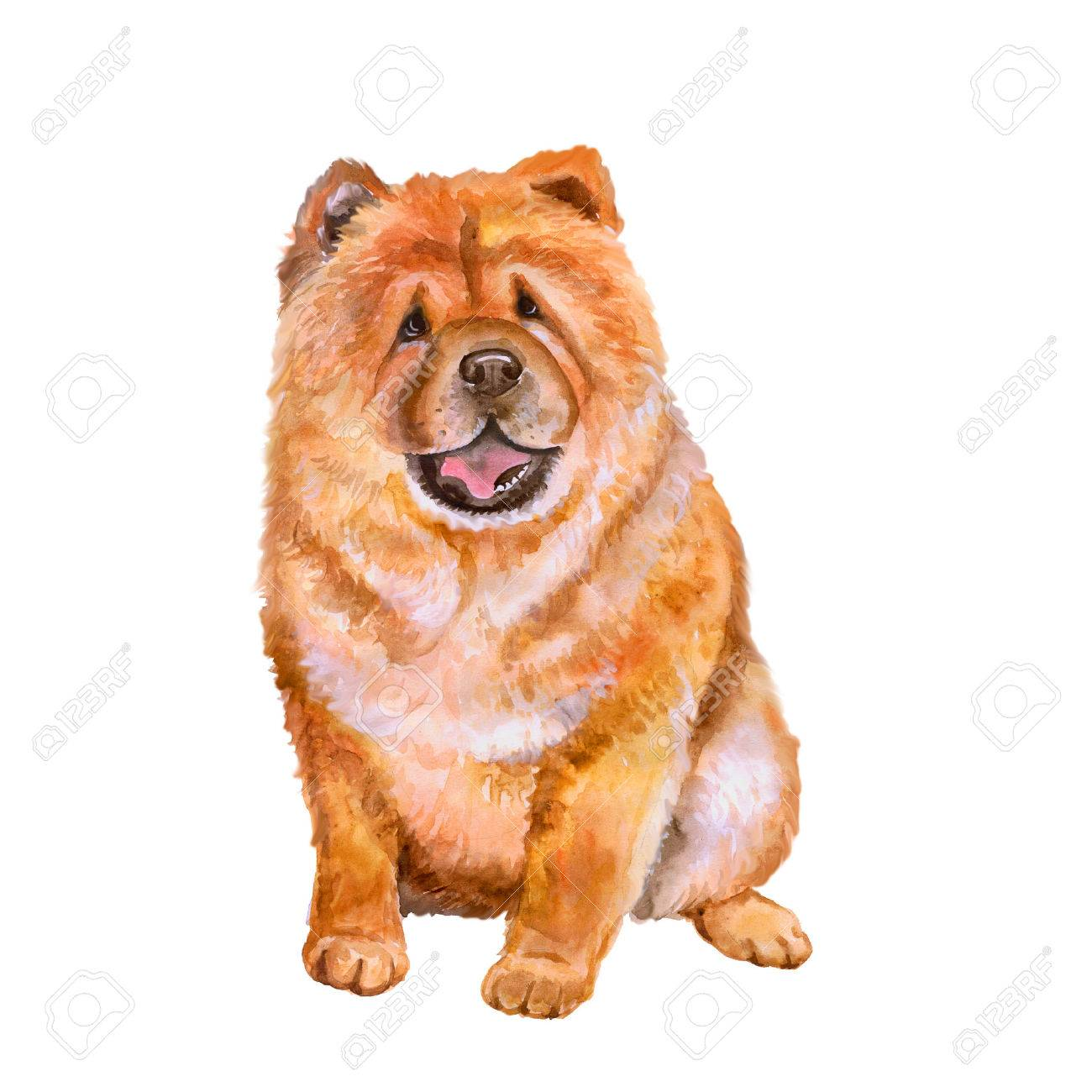 Image result for chow chow clipart
