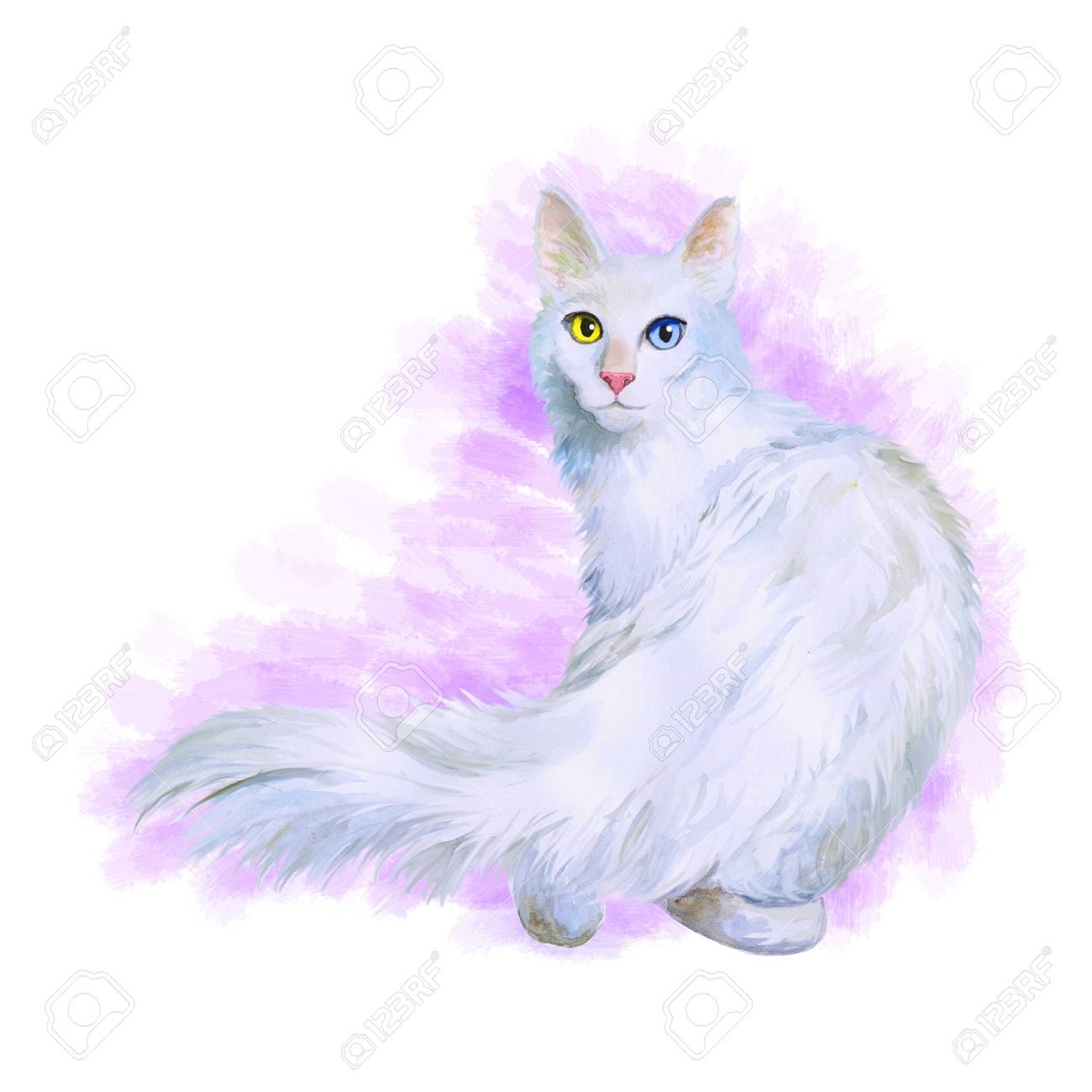 Watercolor Portrait Of Turkish Angora Cat With Odd Eyes Isolated