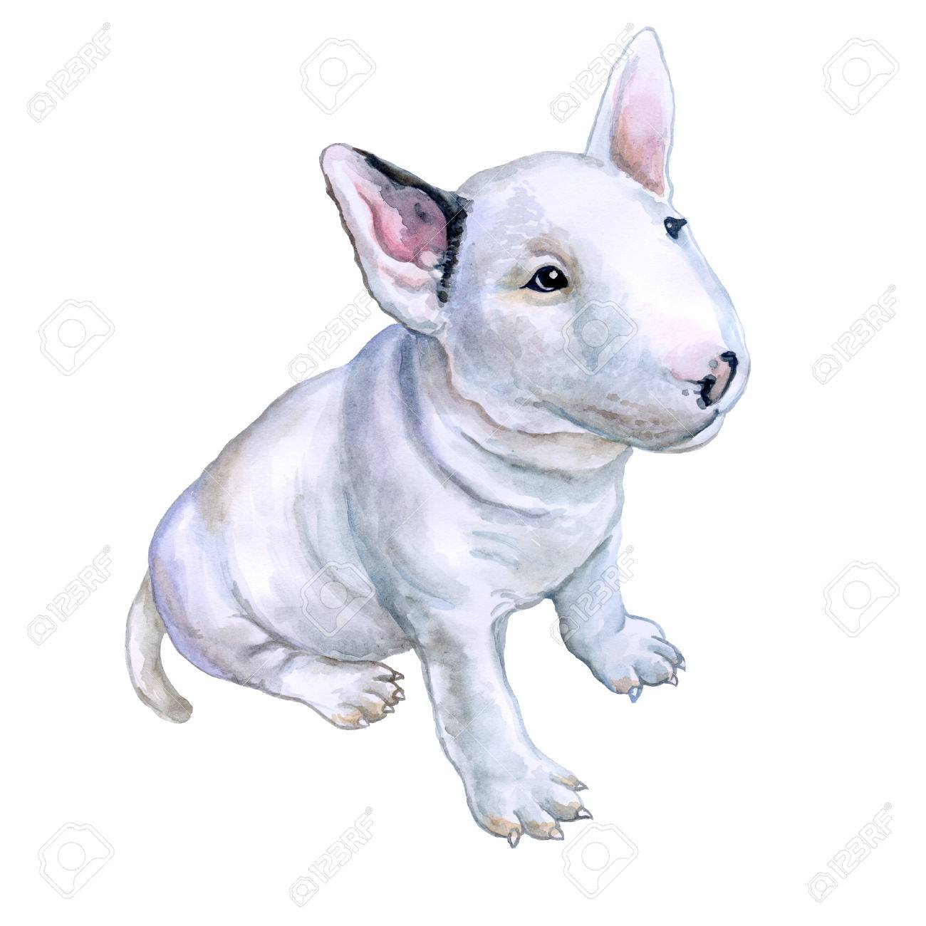 Watercolor portrait of white English Bull terrier, the white