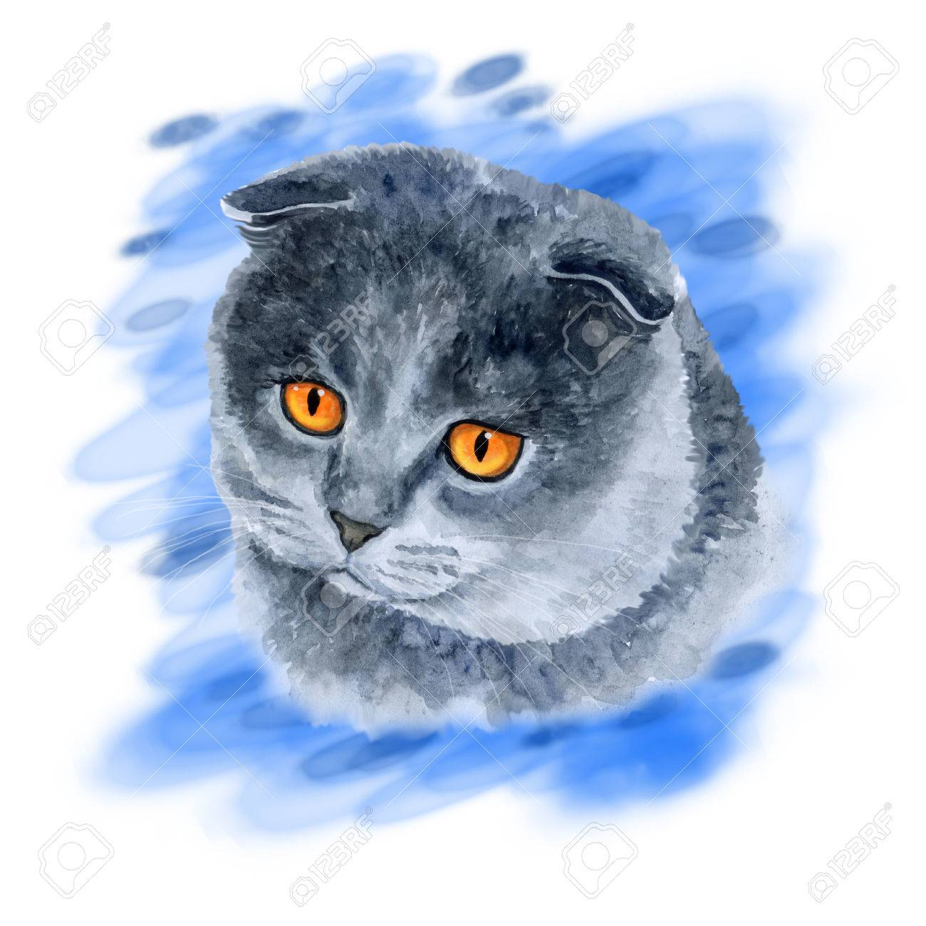 Stock P O Watercolor Closeup Portrait Of Scottish Fold Cute Cat Isolated On Blue Abstract Background Hand Drawn Sweet Home Pet