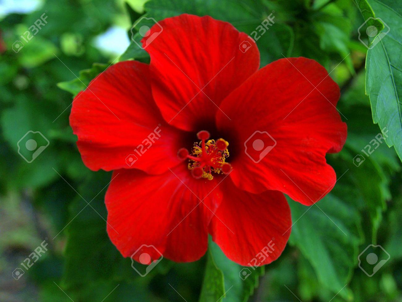 red tropical flower  flower, Natural flower
