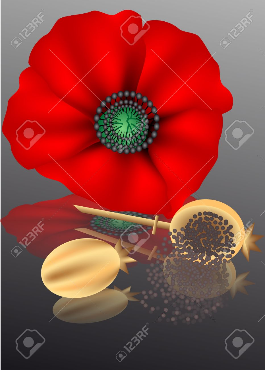 Poppy Seeds With Poppy Flower On A Dark Background Royalty Free