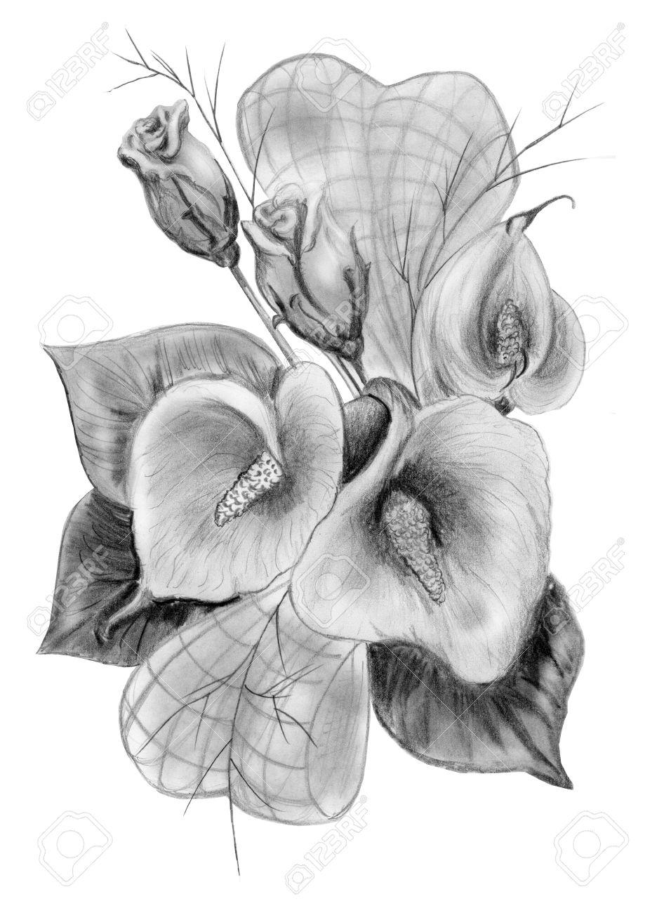 Dibujo A Lápiz De Ramo De Rosas Y Calas Aisladas En Blanco Fotos