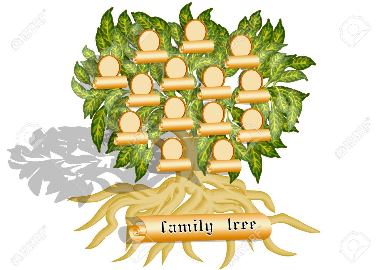 Den Stammbaum Auf Einem Weißen Hintergrund Lizenzfrei Nutzbare ...